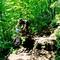 Trail M.