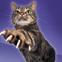 Cat T.