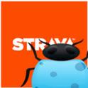 Strava Bugs