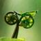 João Grillo Grillo Do Pedal
