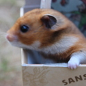 Fiona The Hamster