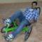 Abdulmohsin A.