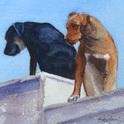 Roofdogs _