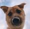 Mugi runs pawsome 🐾 Kenny (sidekick)