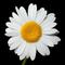 Daisy L.
