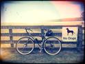 Auckland Bike Slob