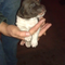 Mace The Strava Dog W.