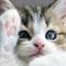 Fresh Kitty