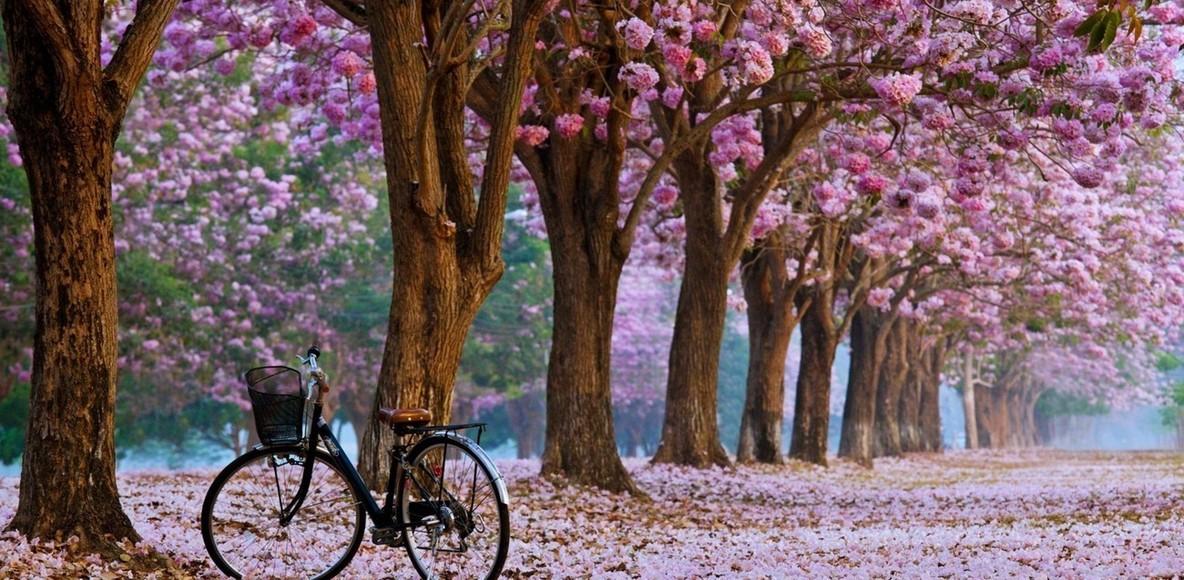 Cobourg Cycling Club