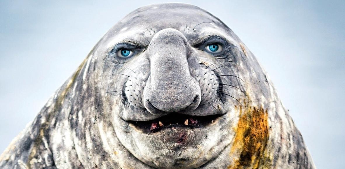 Elephant Seals of Ganei Tikva