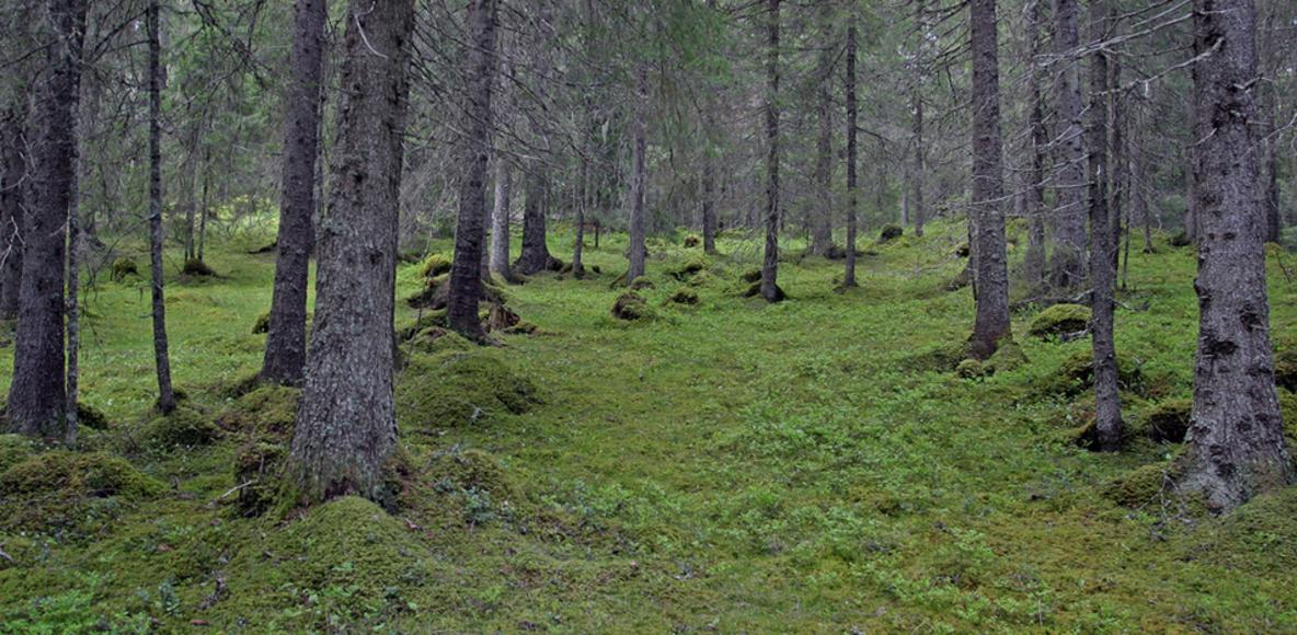 Underskog runners