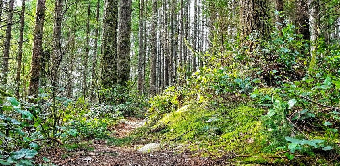 Salomon Vancouver Trail Lab