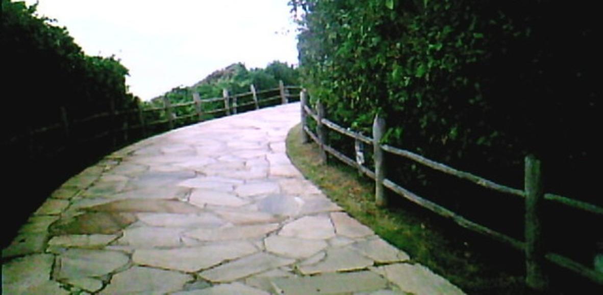 Pedal RzO