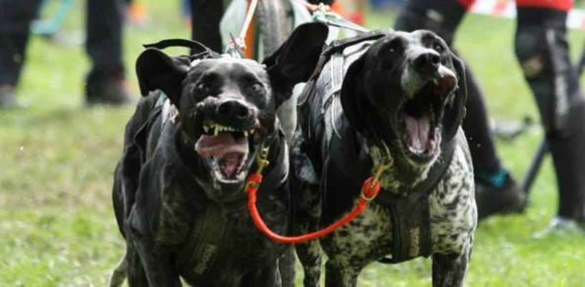 Dog's sport world