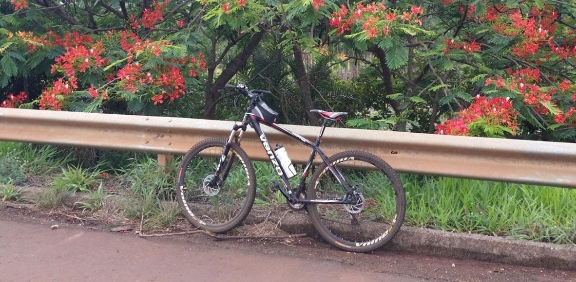 Pedal Betel