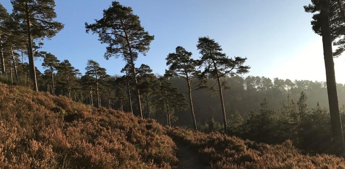 Berglauf Pfälzerwald