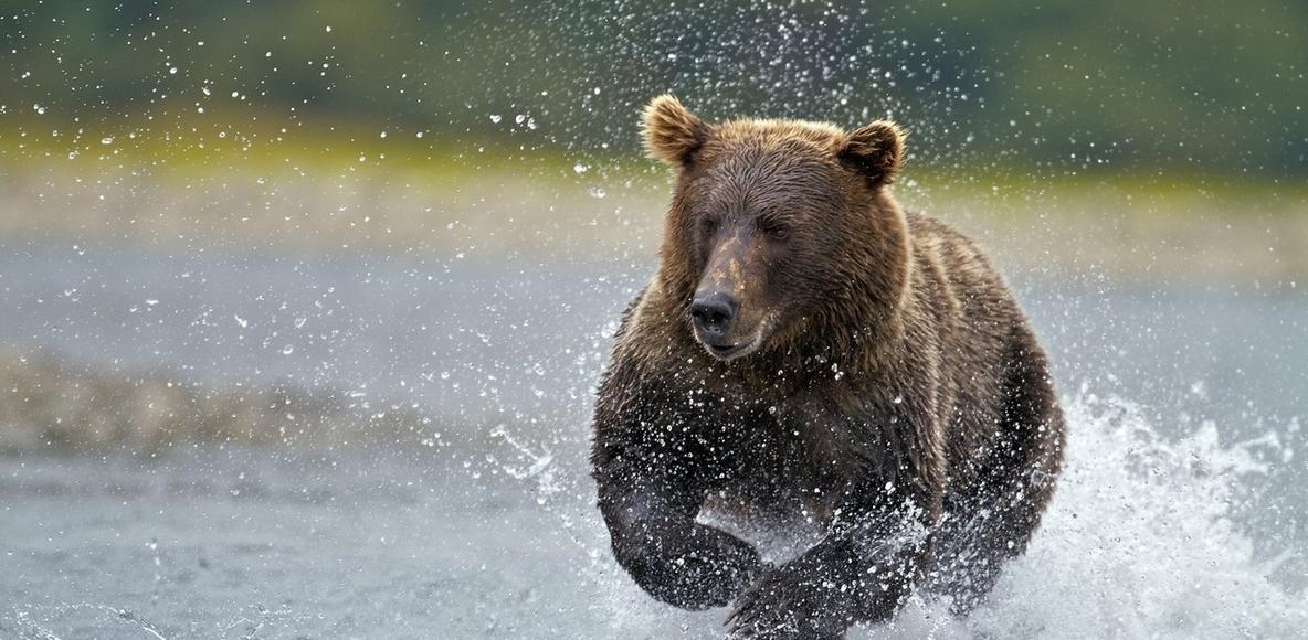 Jeffersonville River Bears