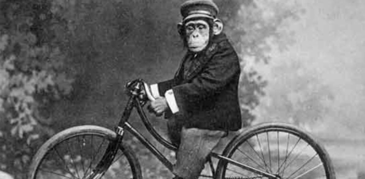 Monkey Magic CC