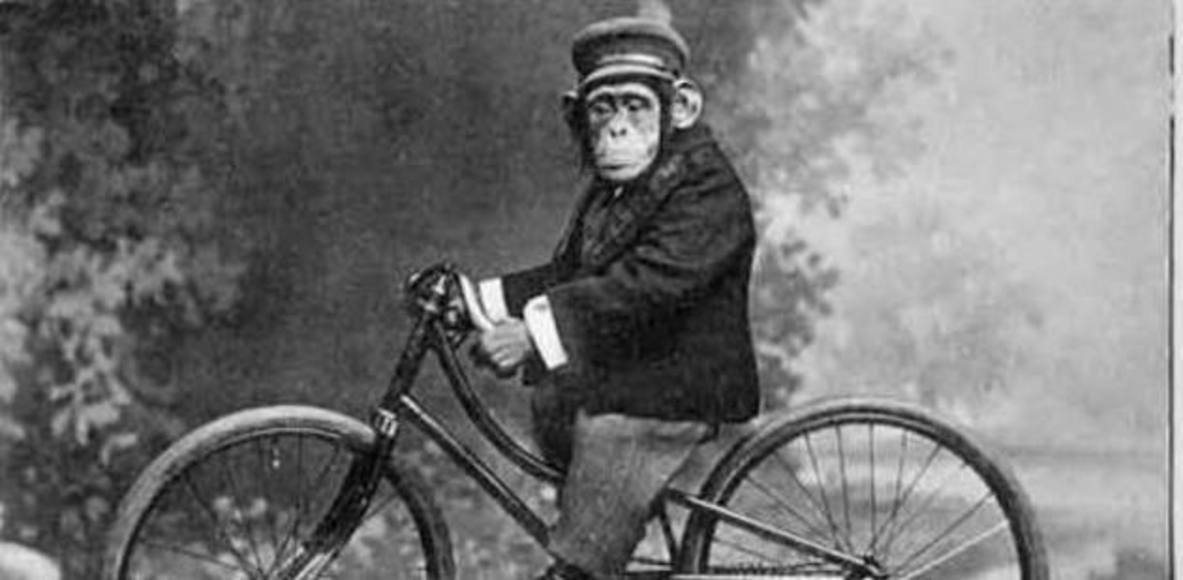 SANDF Cycling