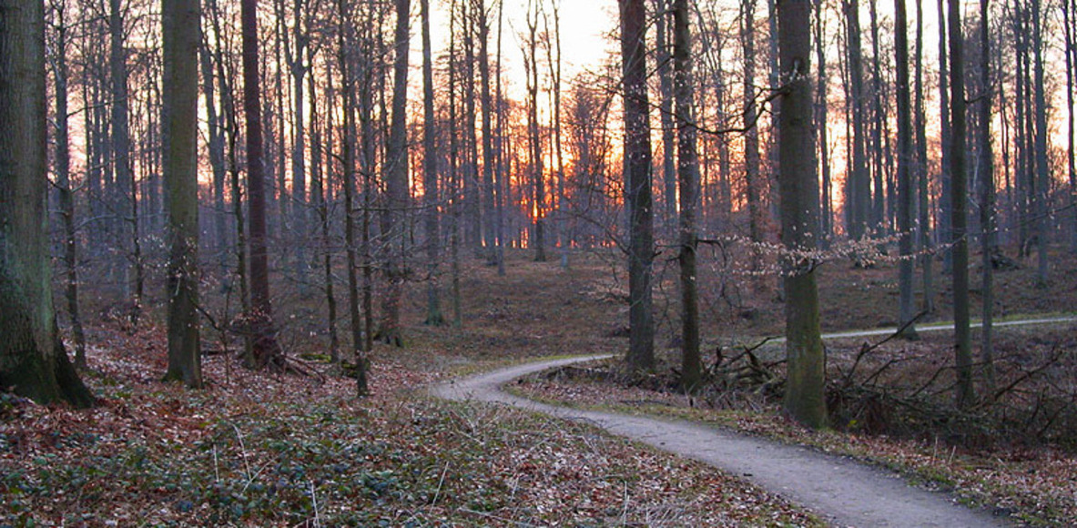 Zoniënwoud - Forêt de Soignes - Running