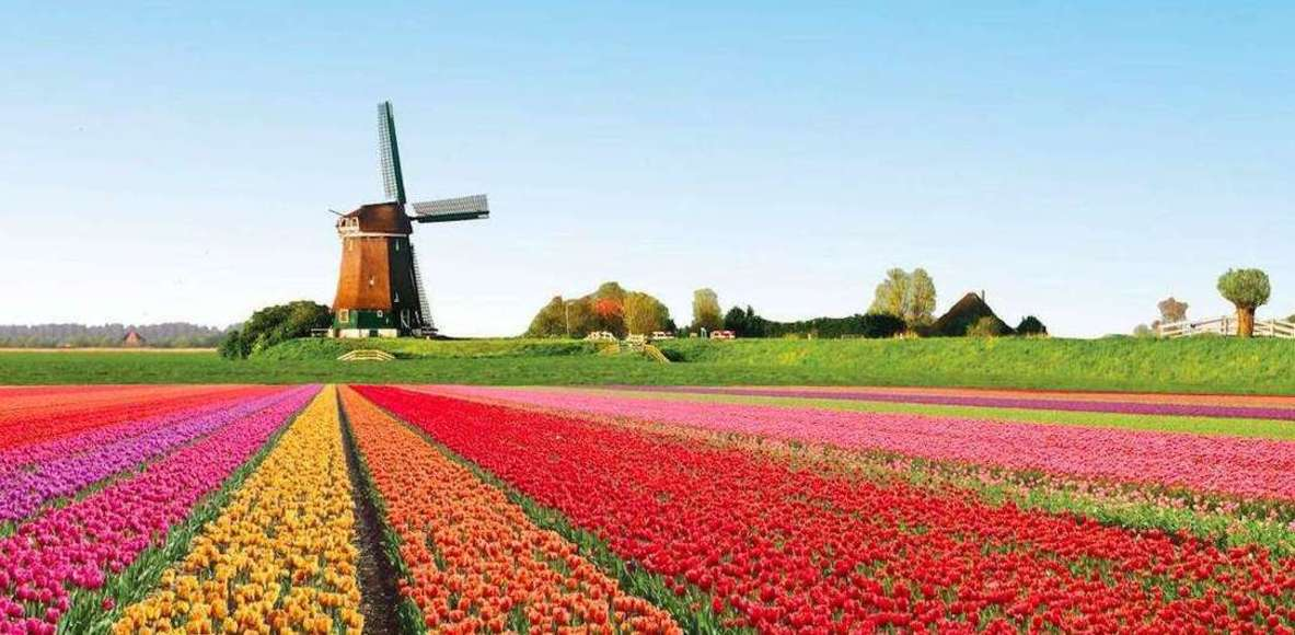 Strava Netherlands - Run