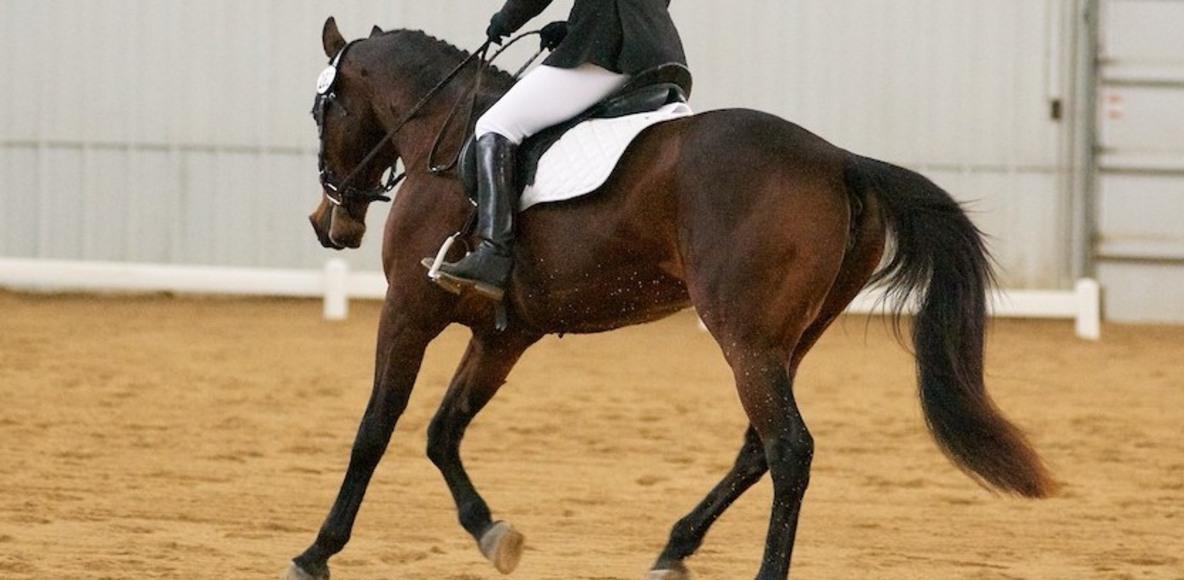 Horse Riders on Strava