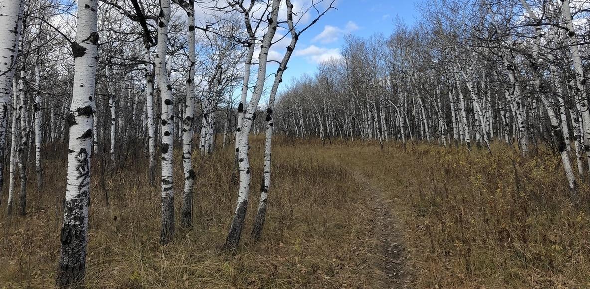 Friendly Manitoba Trail Runners