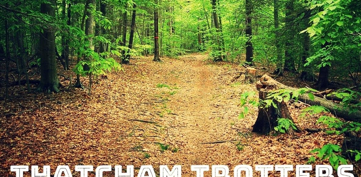 Thatcham Trotters