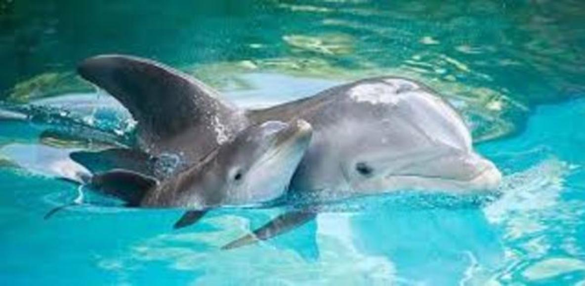 I delfini del Salento