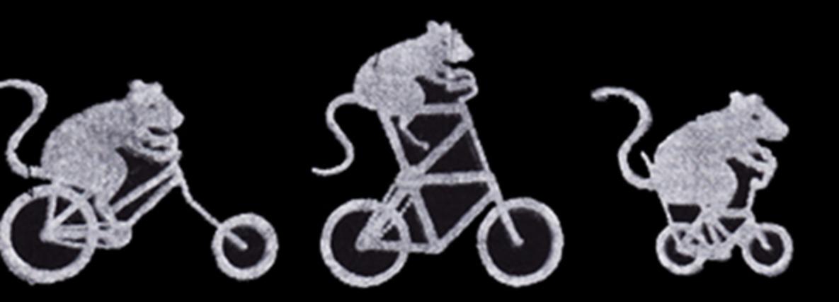 Ratt Riders