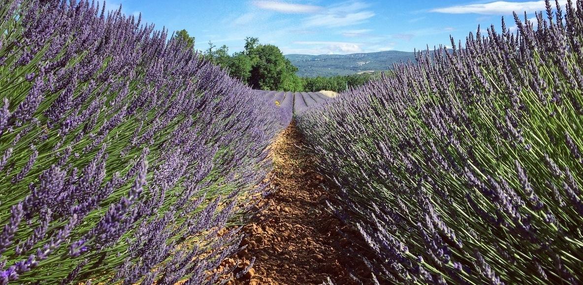 L'Equipe Provence