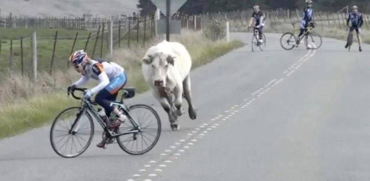 Pro Cycling Team De Barriere