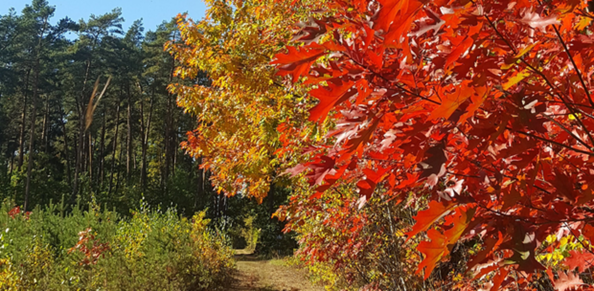 Biegnący z dzikami - Wild Trail Zalesie