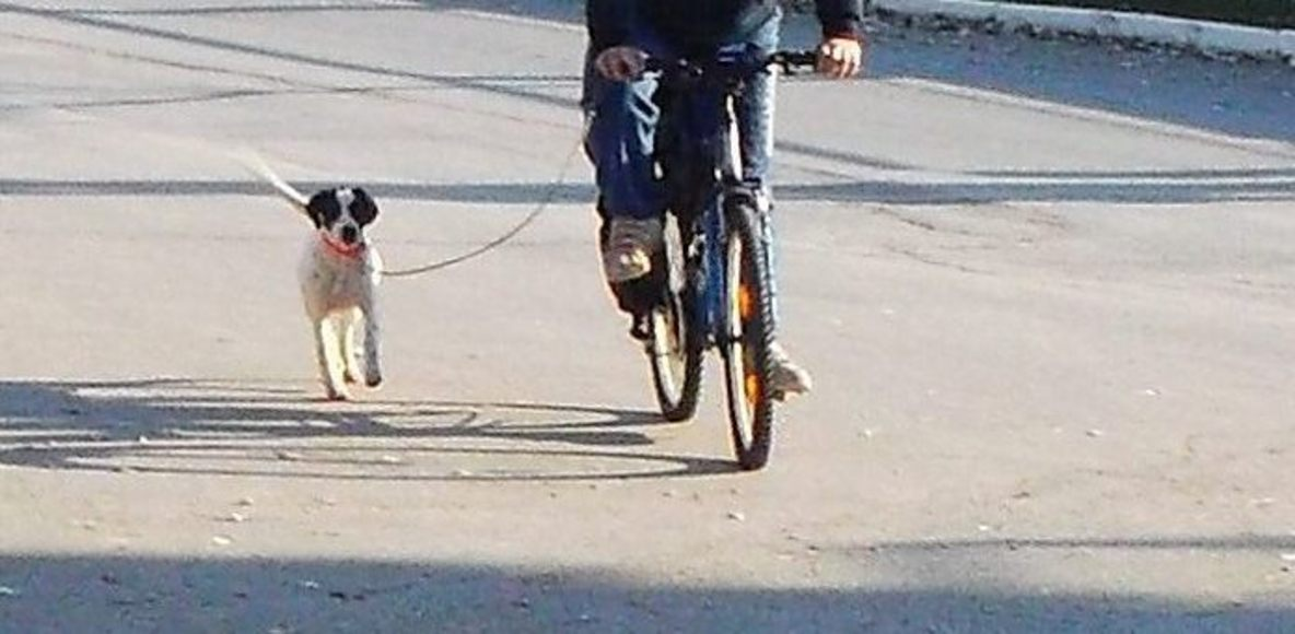 Bikejoring Hellas