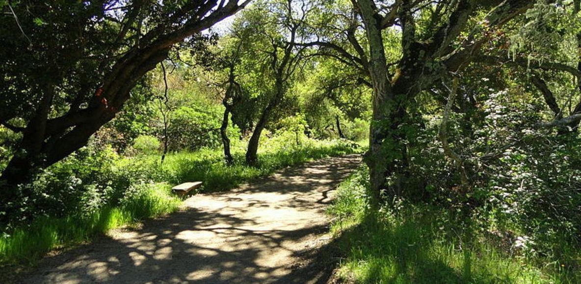 Garland Ranch Regional Park Trail Runners