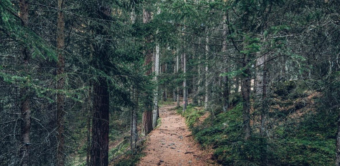 NL Trail Runners