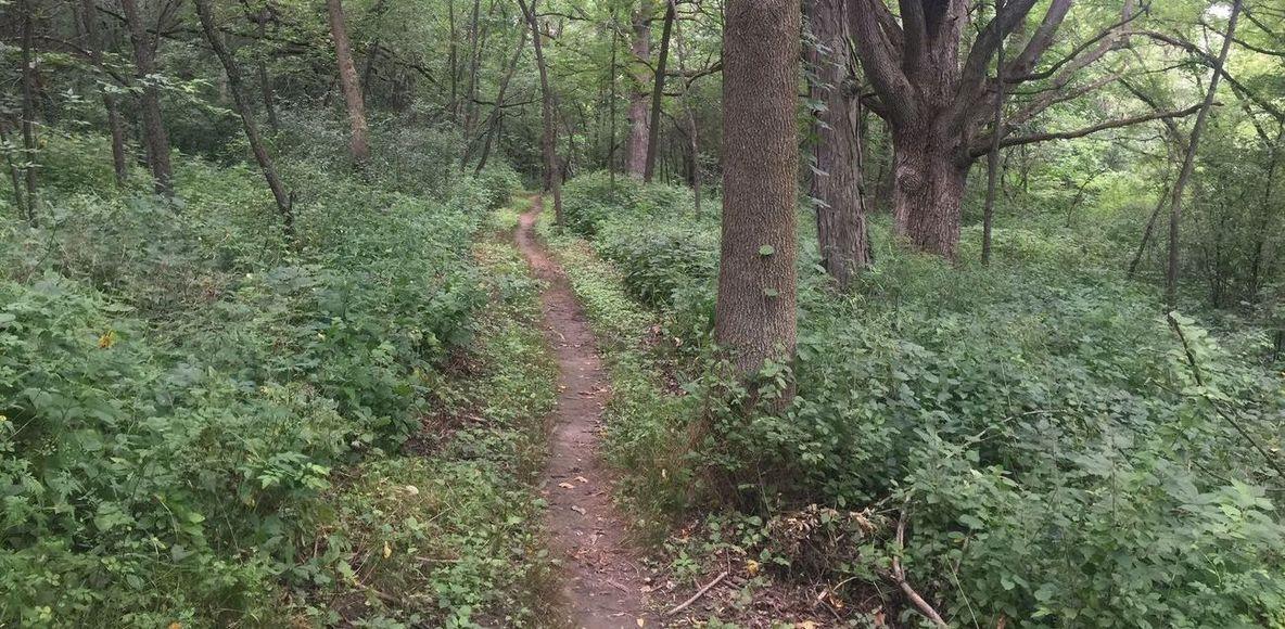 Arbor Rock Running