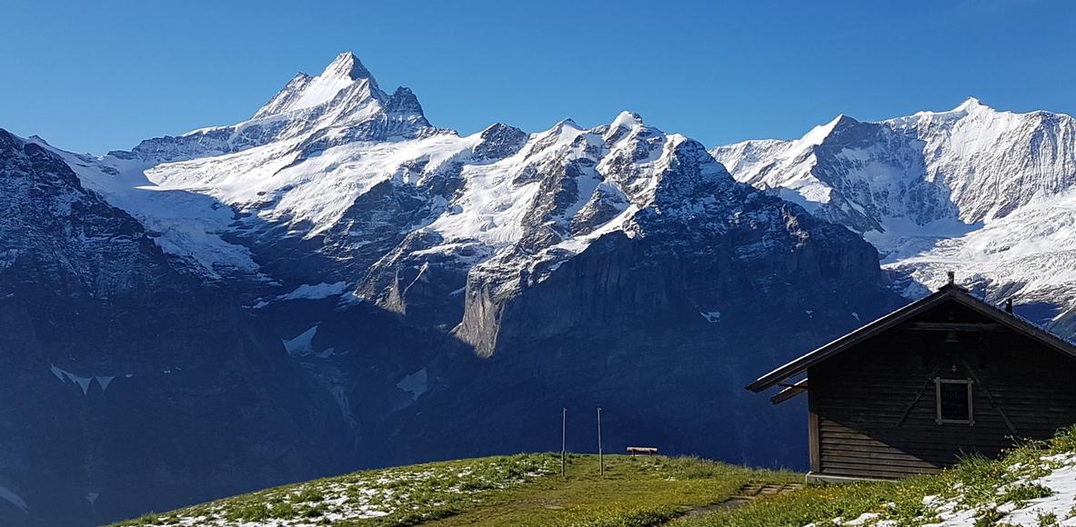 Züri Oberland Trail Runners