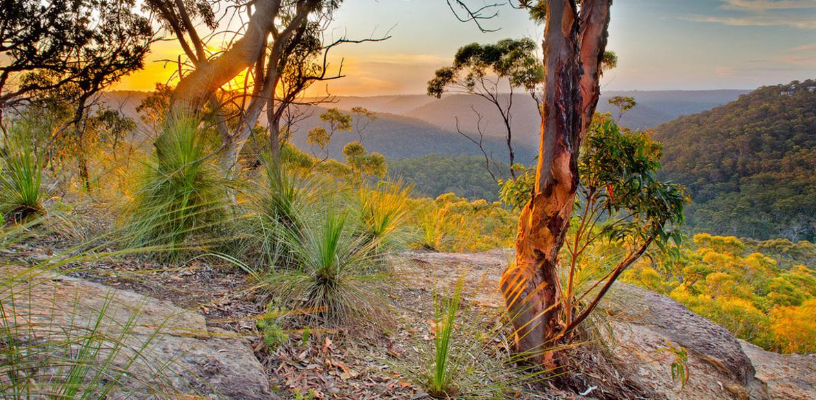 Western Sydney Trail Runners (WSTR)