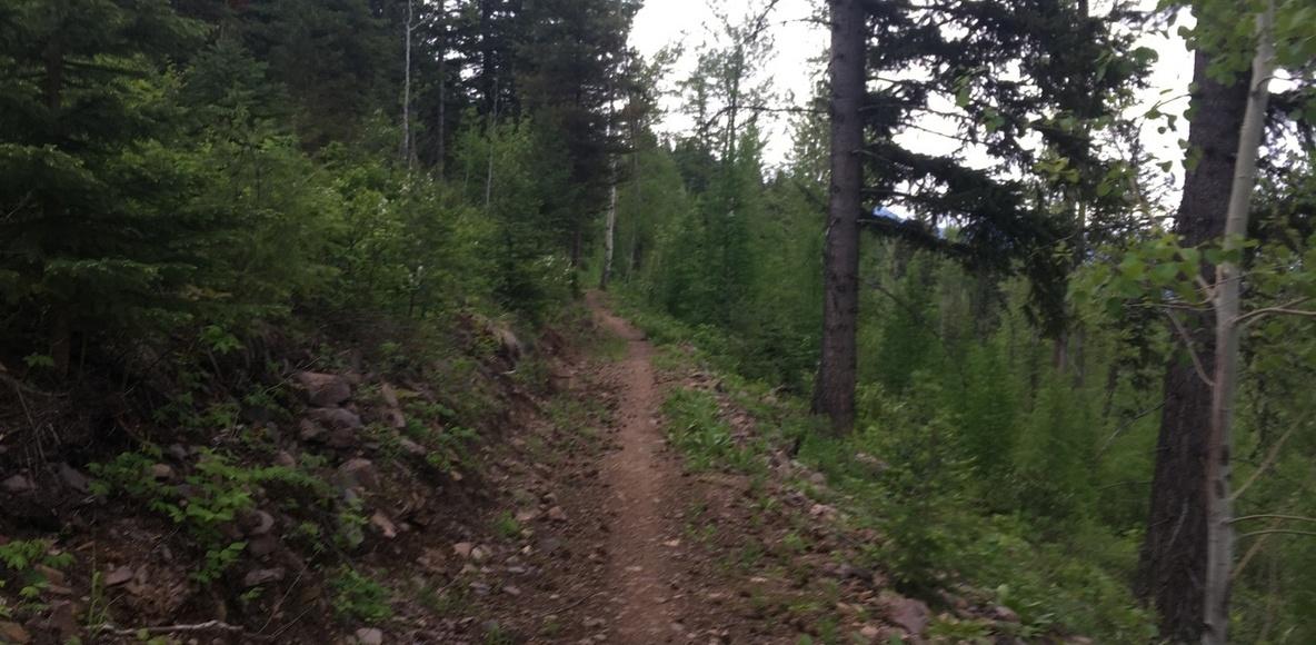 Sparwood Trails Alliance