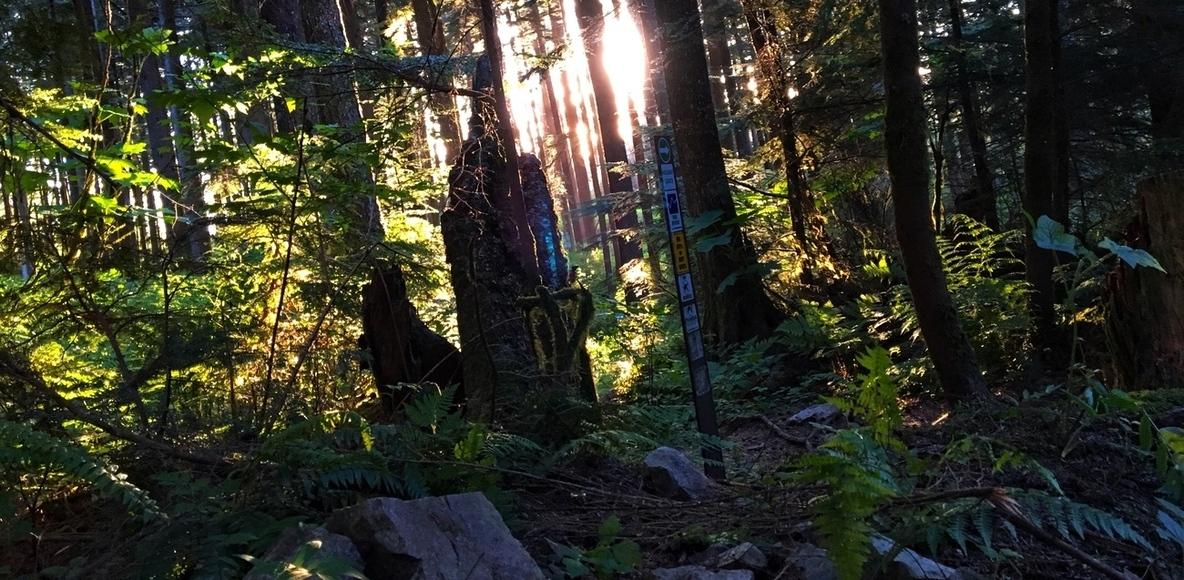 Valley Vertikiller 16K Trail Race