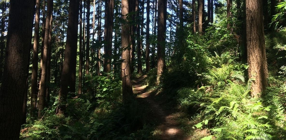 Portland Trail Runners