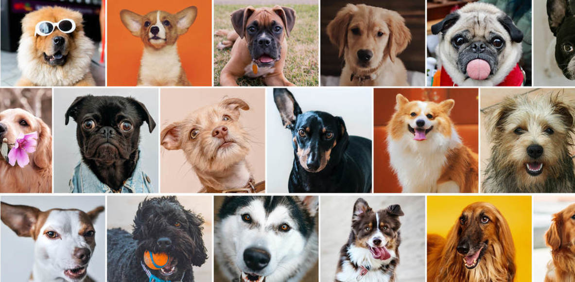 Doggone 5k Series