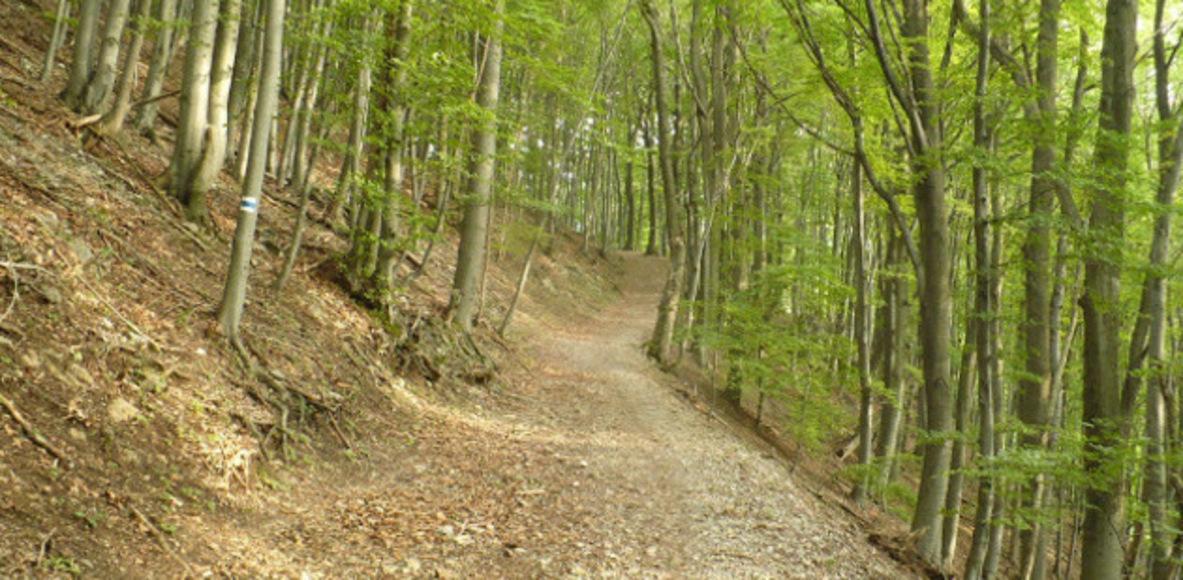 Trail running Hungary